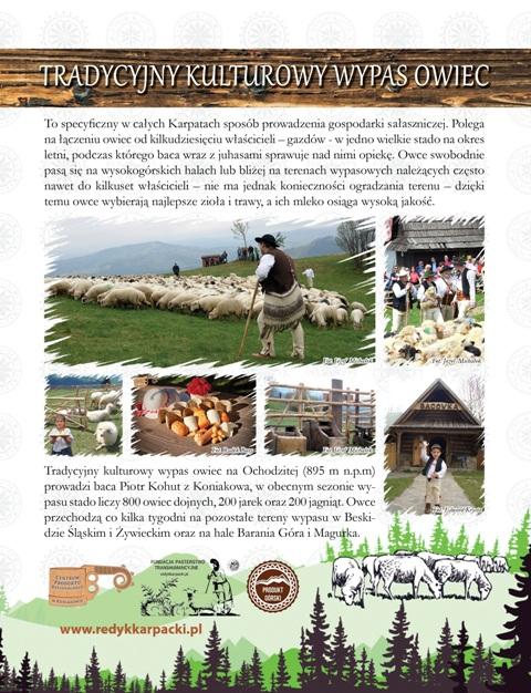 Kulturowy_wypas owiec1
