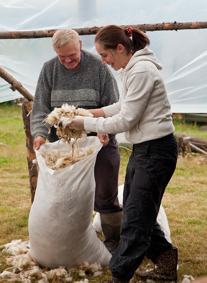 strzygani owiec zdjęcie3